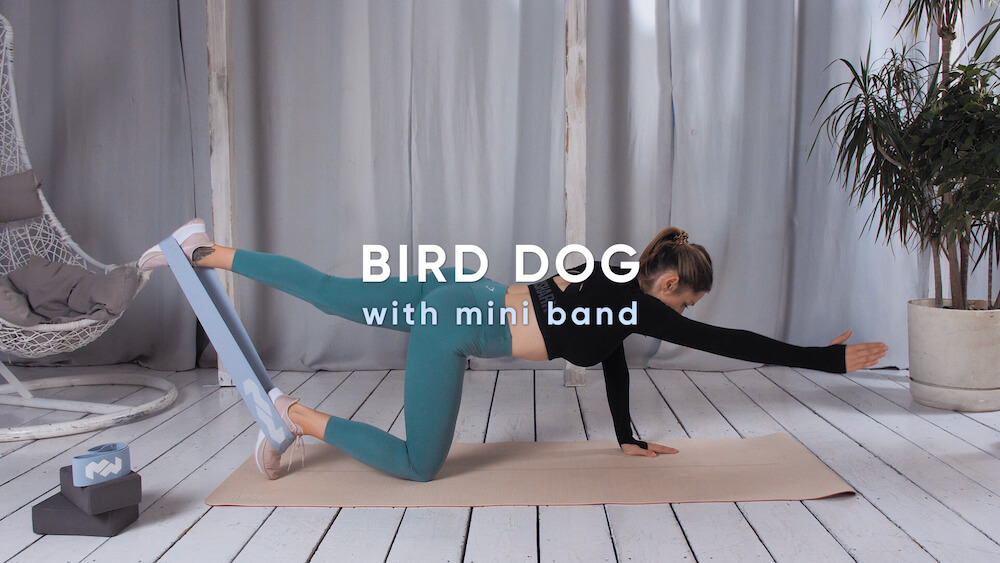 Bird dog with mini band